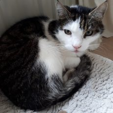 Patiënt van de maand februari: Kitty
