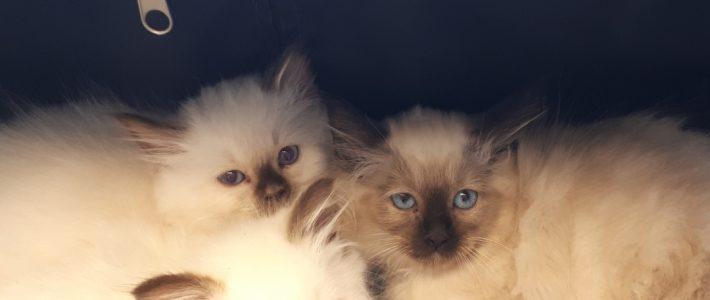 Patiënt van de maand mei: Hele schattige kittens