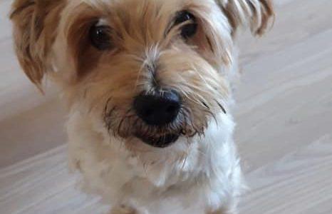 Patiënt van de maand april: Daisy